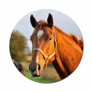Paard flatback button