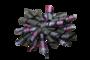 Krullenclip donkergrijs/paars/roze_